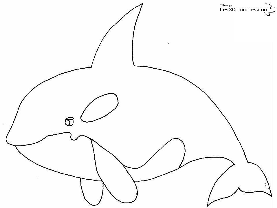 dessin orque et dauphin
