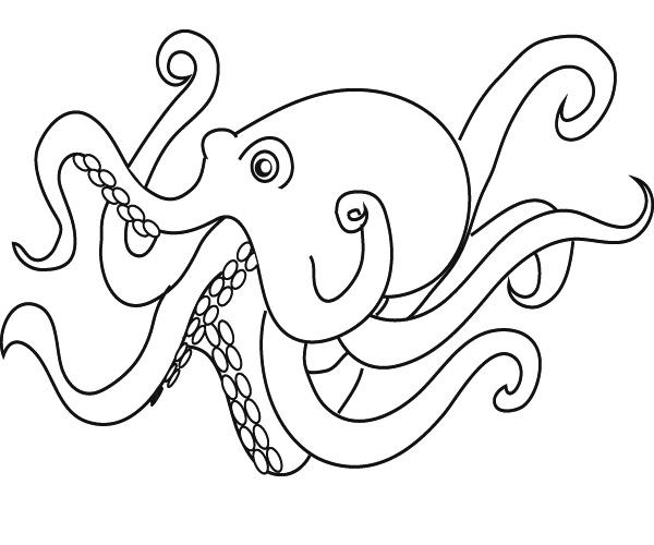 coloriage à dessiner orque à imprimer