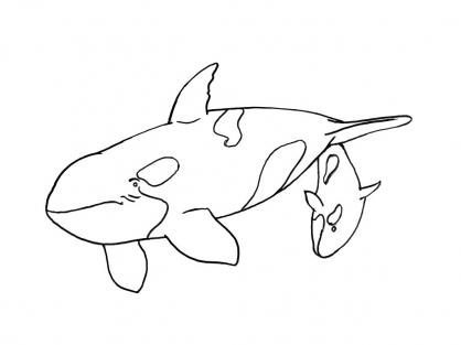 jeux de dessin d'orque