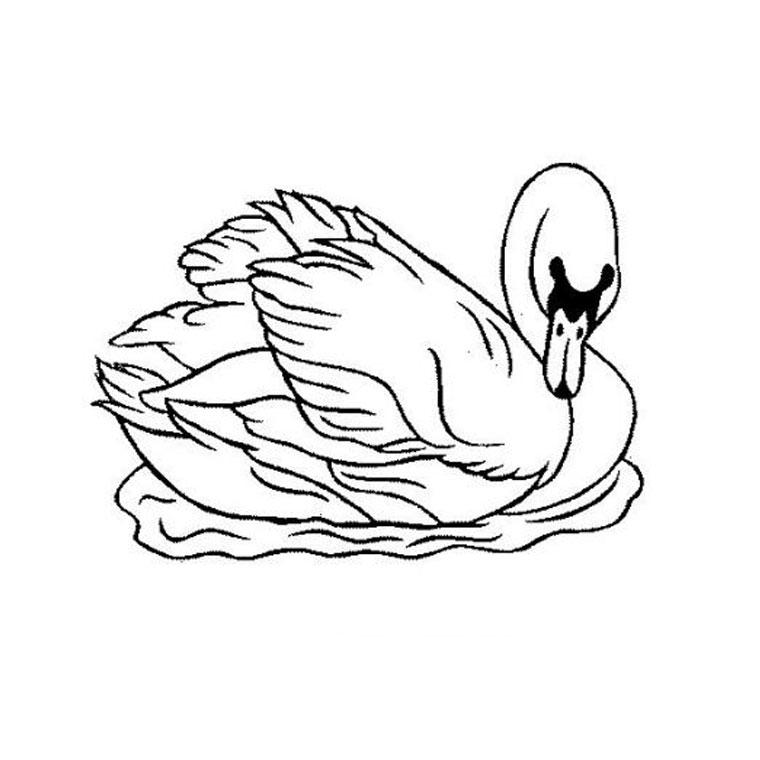 dessin � colorier d'orque