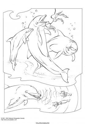 dessin orque � imprimer gratuit