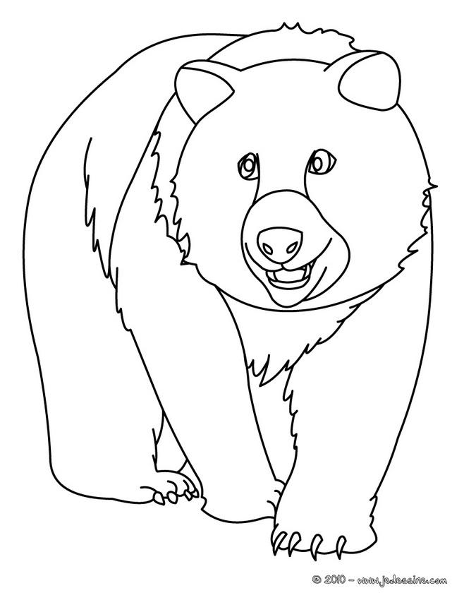 dessin ours blanc imprimer