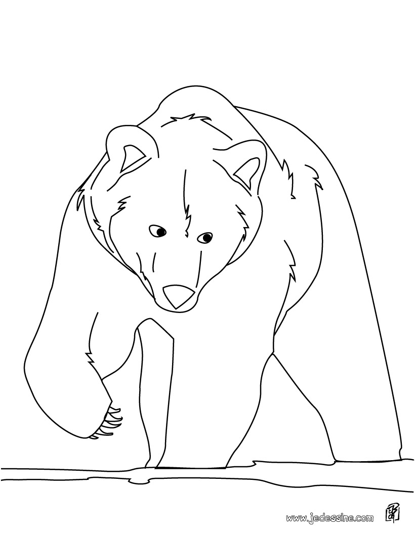 Dessin d 39 ours blanc - Ours polaire dessin ...