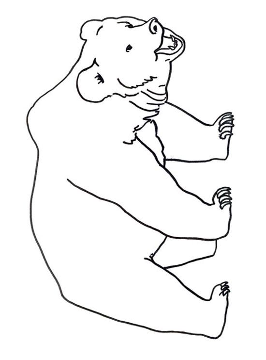 Coloriage dessiner ours blanc imprimer - Ours a dessiner ...