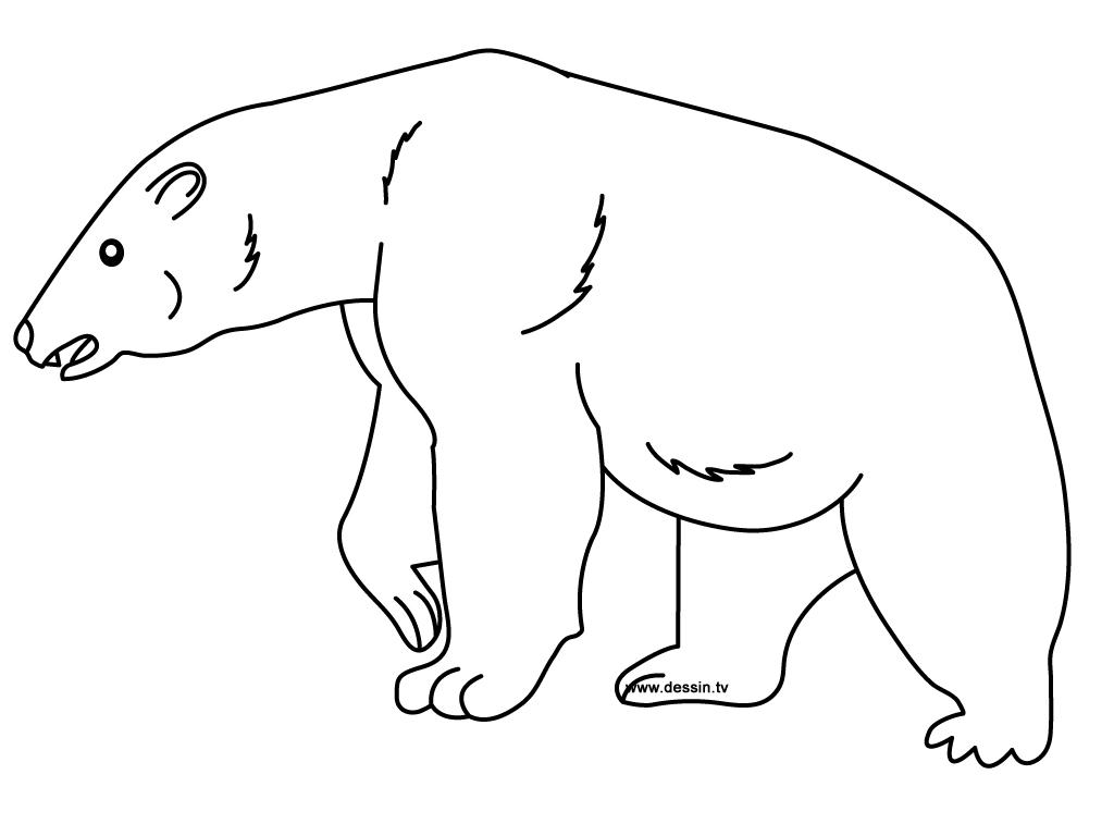 dessin gratuit ours polaire