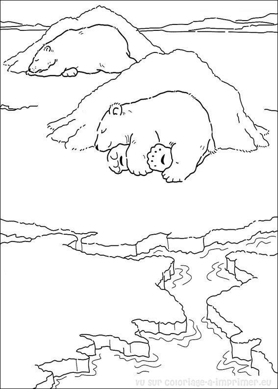 dessin à colorier ours polaire imprimer