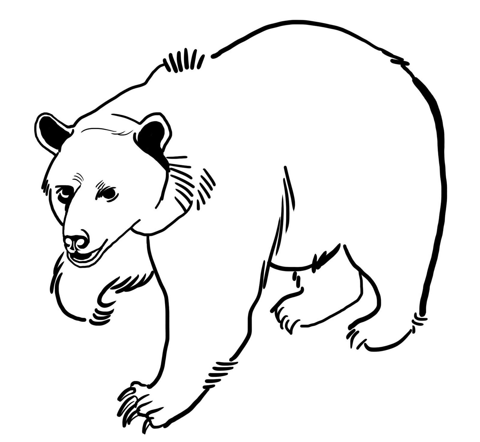coloriage à dessiner bébé ours polaire