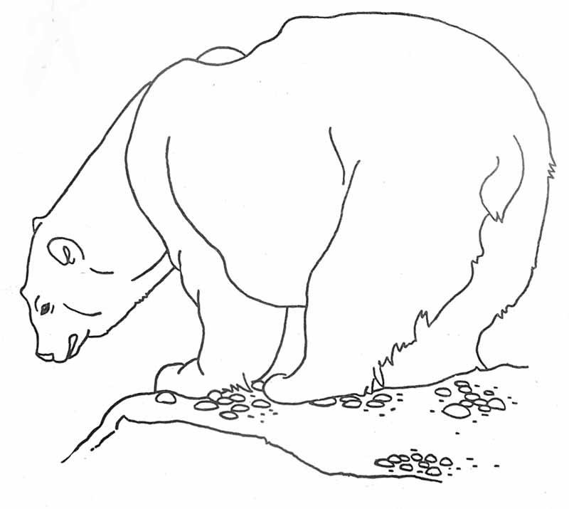 Dessin plume le petit ours polaire - Dessin d un ours ...