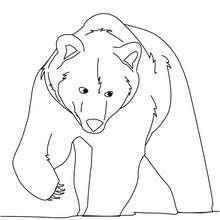 dessin dours polaire imprimer
