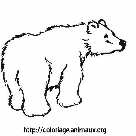 Coloriage d 39 ours polaire imprimer - Ours a dessiner ...