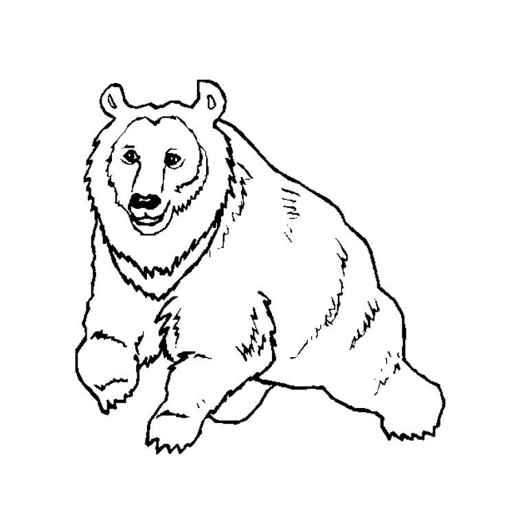 dessin à colorier d'oursin