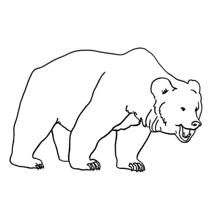 colorier un ours