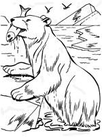 coloriage à dessiner ours petite section