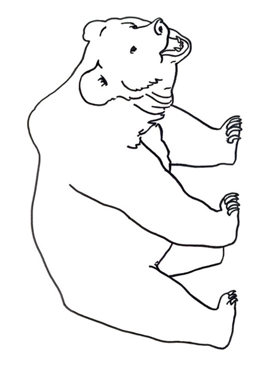 dessin à colorier ours blanc