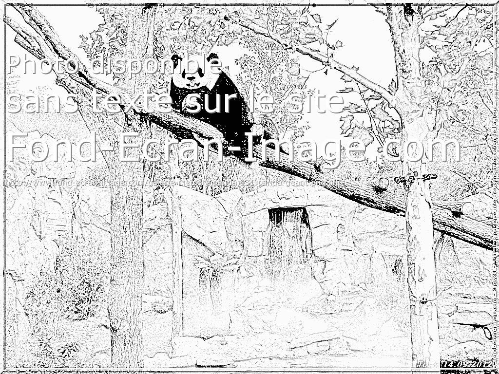 12 dessins de coloriage panda g ant imprimer - Image de panda a imprimer ...