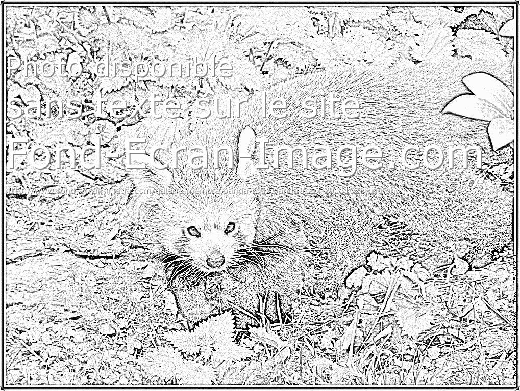 12 dessins de coloriage panda roux imprimer - Coloriage panda roux mandala ...