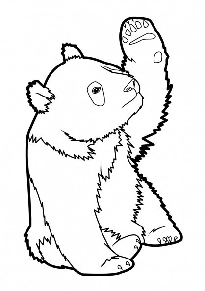 coloriage à dessiner panda petit panda miyazaki