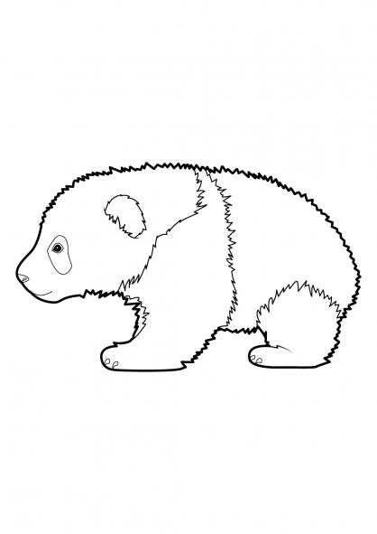 colorier un panda