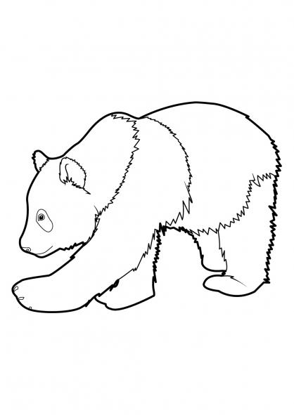 dessin panda à imprimer
