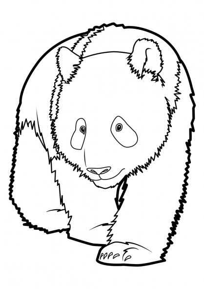 coloriage à dessiner panda chinois