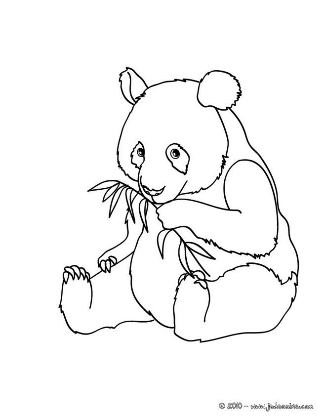 coloriage à dessiner de panda roux a imprimer