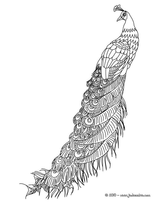 coloriage à dessiner paon imprimer gratuit