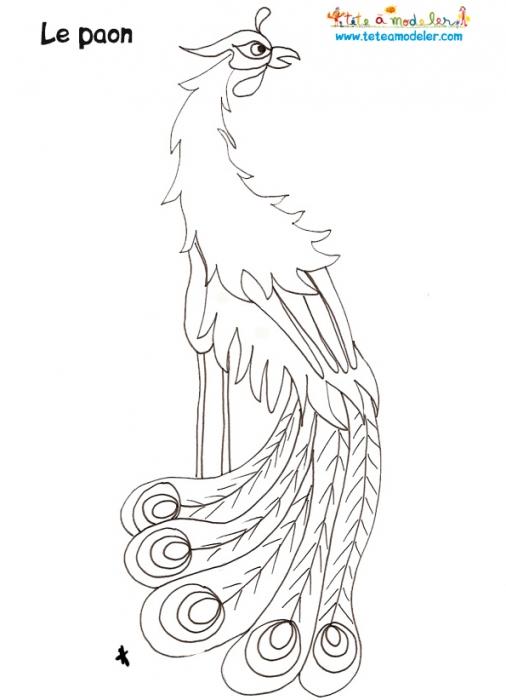 coloriage à dessiner magique paon