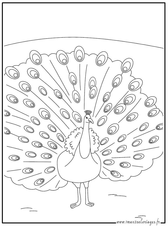 dessin paon dessin à colorier gratuit