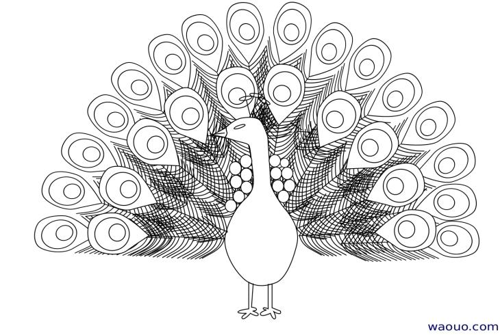 coloriage à dessiner de paon qui fait la roue