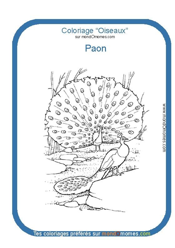 dessin à colorier de paon faisant la roue