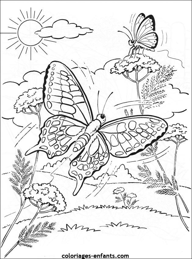 96 dessins de coloriage papillon belle dame imprimer - Dessin de petit papillon ...