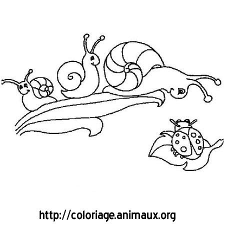 94 dessins de coloriage papillon hugo l 39 escargot imprimer - Dessins hugo l escargot ...