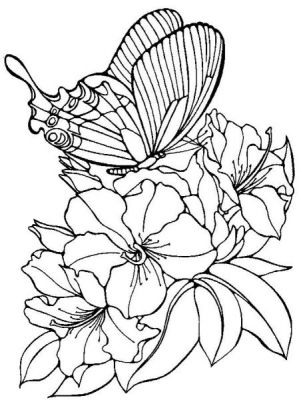 99 dessins de coloriage Papillon Simple à imprimer