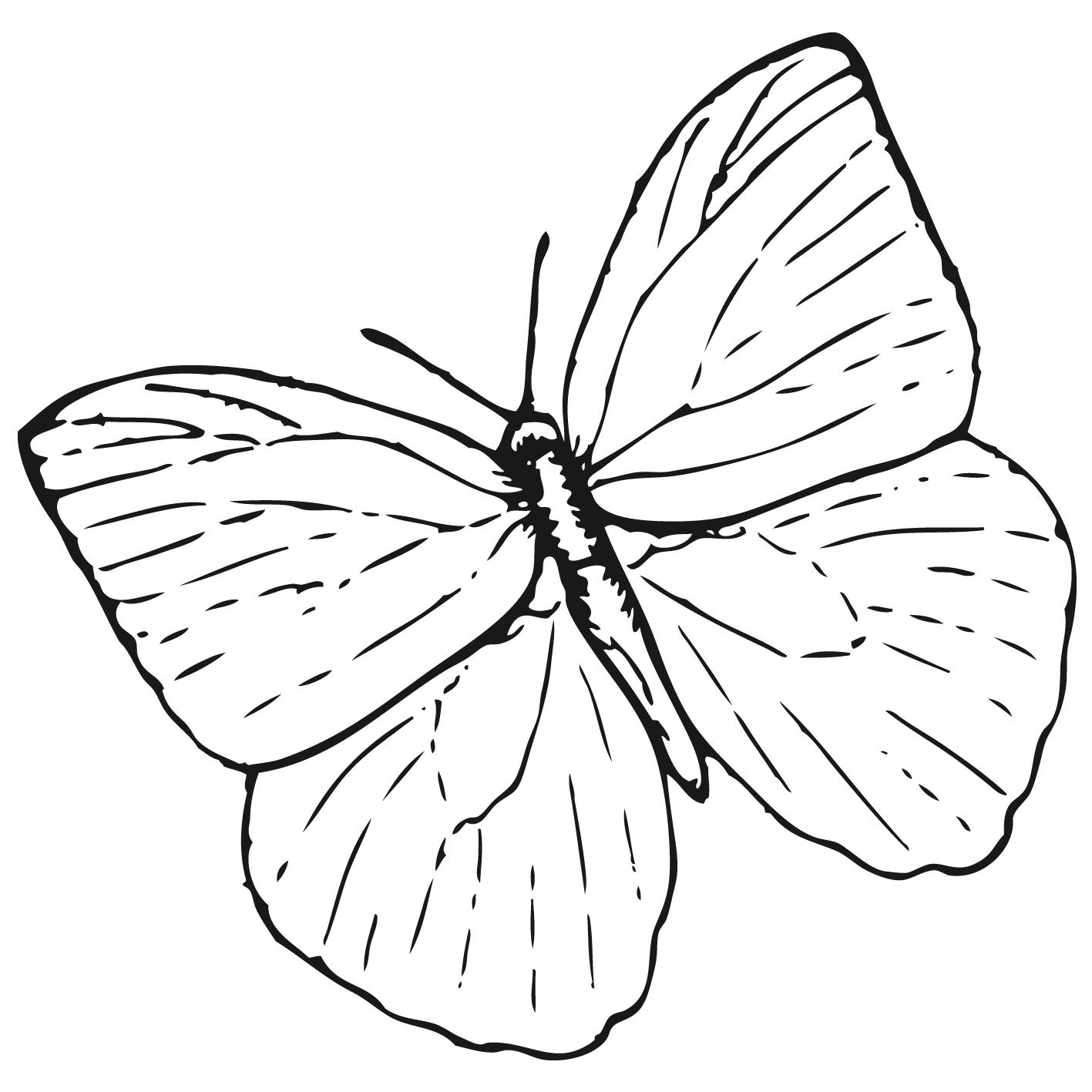 Dessin De Papillon Facile A Faire