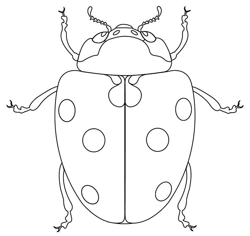 94 dessins de coloriage papillon sym trie imprimer - Symetrie a imprimer ...