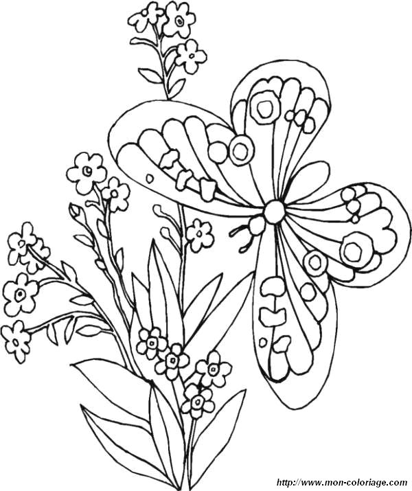 coloriage de papillon a imprimer gratuit