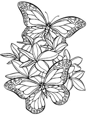 Dessin de papillon sur une fleur - Papillon imprimer ...