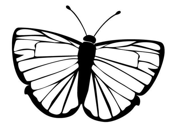 dessin papillon imprimer