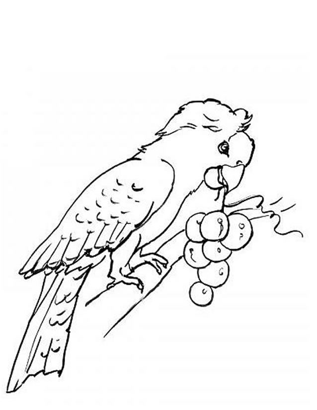 coloriage à dessiner perroquet rio
