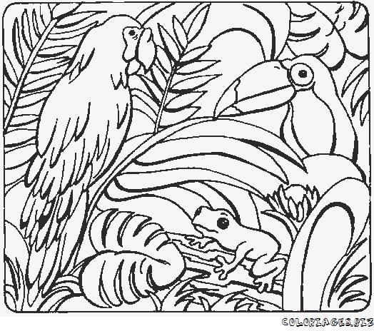 dessin � colorier magique de perroquet
