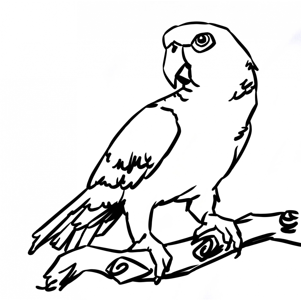 Coloriage dessiner perroquet rio - Dessins de perroquets ...