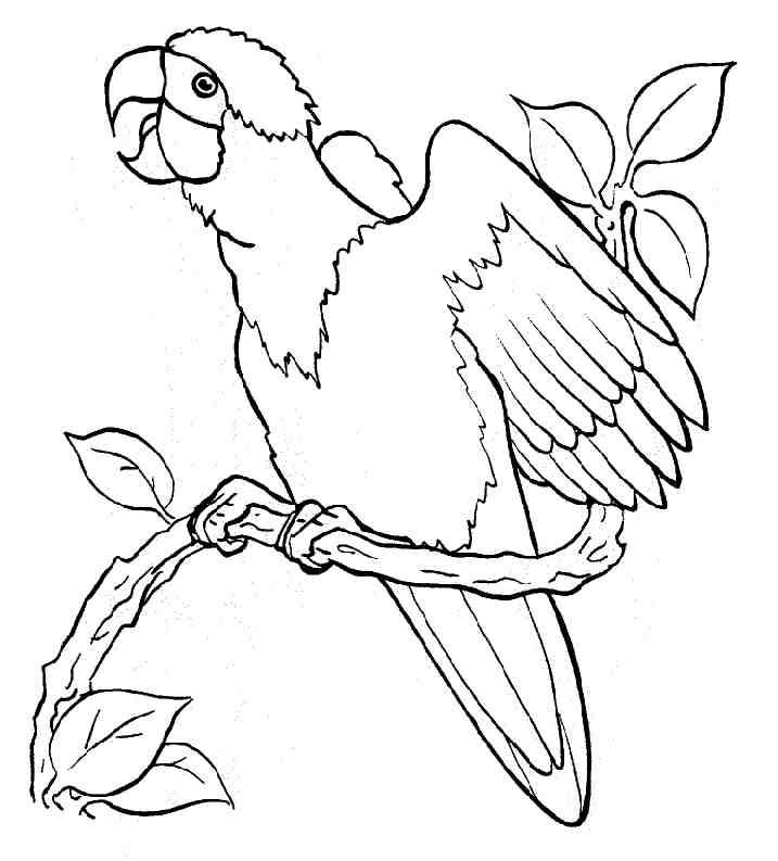 coloriage à dessiner perroquet maternelle