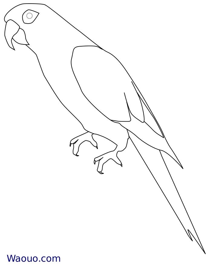 coloriage à dessiner de perroquet gris du gabon