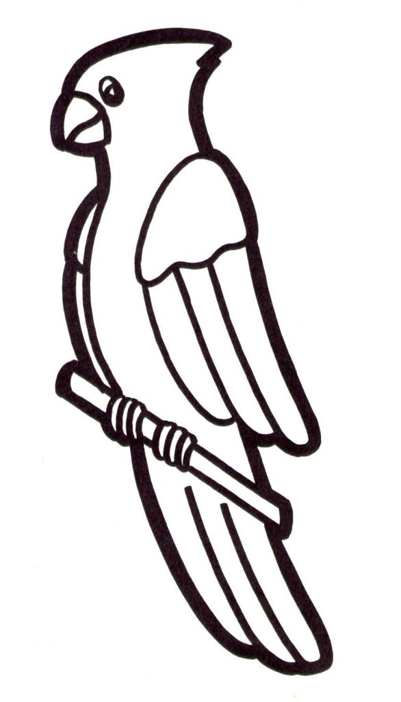 dessin un perroquet