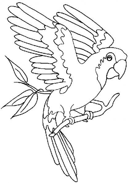 dessin à colorier de perroquet qui vole