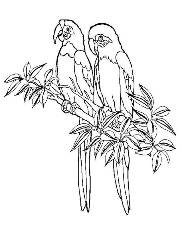 dessin à colorier perroquet mandala