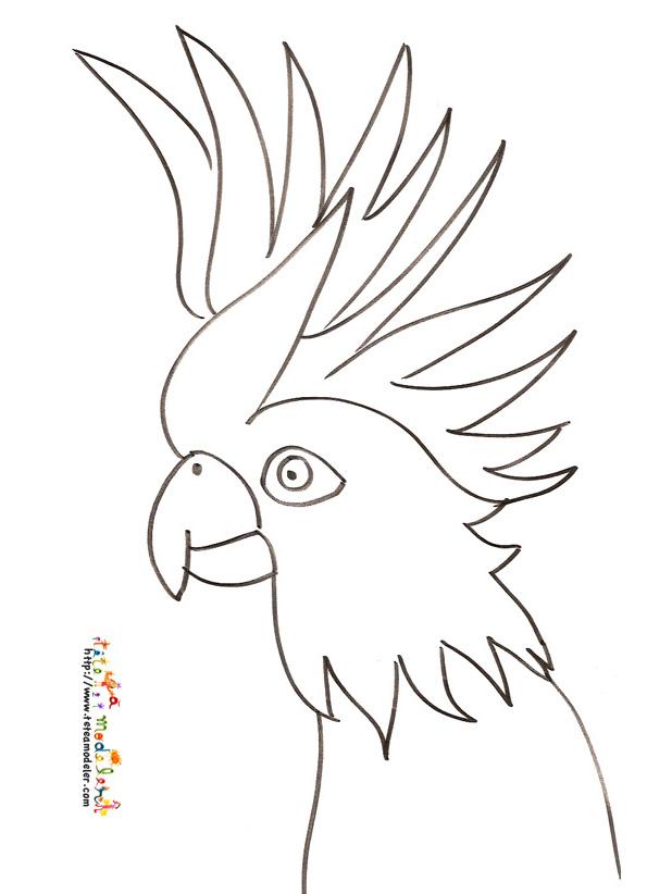 coloriage magique de perroquet