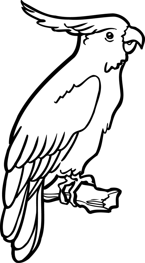 dessin à colorier de perroquet gris du gabon