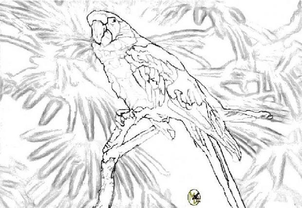 dessin à colorier perroquet rio a imprimer