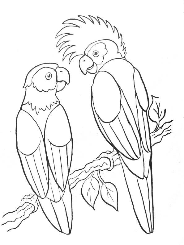 dessin perroquet ara imprimer